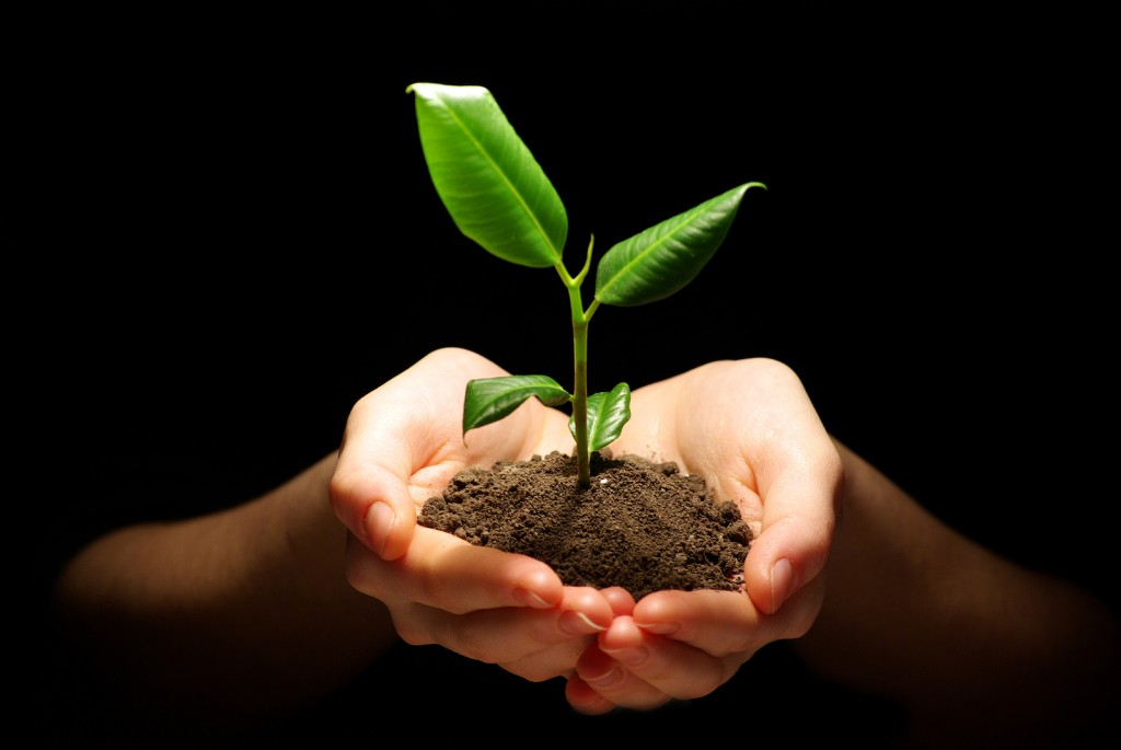 bigstock-Hands-holding-plant-in-soil-on-28160849